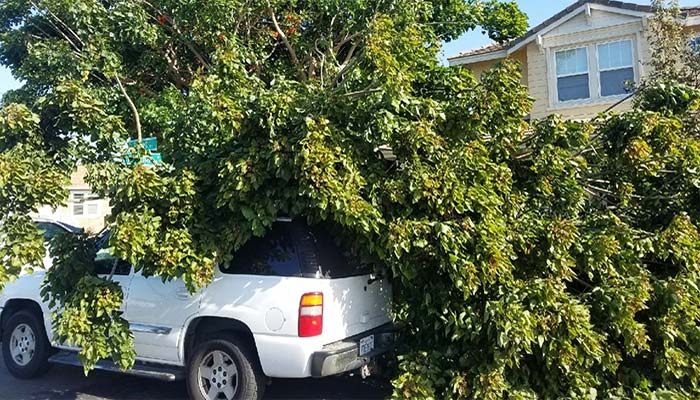Emergency Tree Removal in Ventura County from Joseph Christman's West Coast Tree, LLC